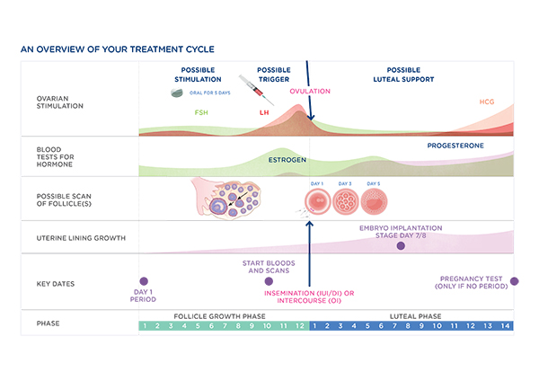Repromed Treatment Cycle Overview Graph